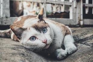 1_3_cat_ed