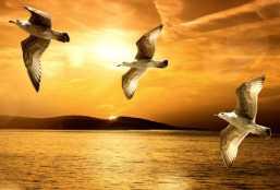 5_3_birds_add_ed