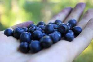 5_4_berries2_ed