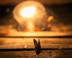 7_3_mothlight_ed